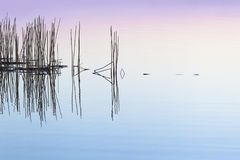 Reflection of reeds in water Stock Photography