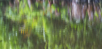 Reflection of river bank vegetation on water Royalty Free Stock Photo
