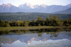 Reflection of the Rockies. The Rockies reflecting on a quiet lake. Columbia valley BC Stock Images