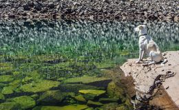 Reflection of the rocky shore in a mountain lake. Rocky shore reflected in the calm surface of the green mountain lake, and white dog on a rock which sees it all Royalty Free Stock Photo