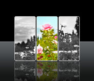 Reflection roses Stock Images