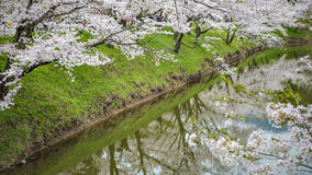 Reflection Sakura trees at Ueda Castle Ruins. Cherry blossom festival at usda castle ruins, Nagano, Japan Stock Images