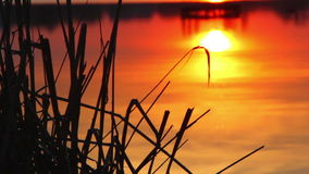Reflection of the setting sun in the water. Evening landscape. Silhouette of reeds against the setting sun,sunset over the river. Reflection of the evening sun stock footage