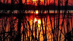 Reflection of the setting sun in the water. Evening landscape. Sunset over the river. Waves on water. Reflection of the setting sun in the water of a beautiful stock footage