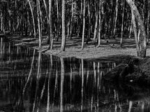 Reflection. Shadows of the trees on water Stock Images