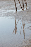 Reflection On The Shoal. The reflection of sticks on the shoal when ebb tide Royalty Free Stock Photography