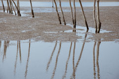 Reflection On The Shoal. The reflection of sticks on the shoal when ebb tide Stock Photos