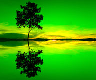 Reflection and silhouette of a single tree Royalty Free Stock Image