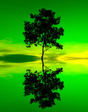 Reflection and silhouette of a single tree Stock Photography