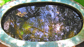 Reflection of sky and trees in the fish pond Royalty Free Stock Photo