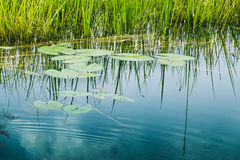 Reflection of sky on water Royalty Free Stock Images