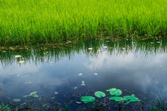 Reflection of sky on water Royalty Free Stock Photo