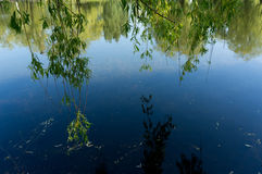 Reflection of the sky and willow branches in water surface.  stock image