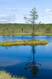 Reflection of small island and pine on water stock photo