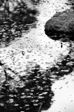 Reflection in a small pond. Leaves, rocks and reflection in a small pond, California Royalty Free Stock Images