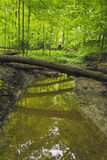Reflection in small stream. Stock Photography