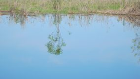 Reflection of small tree in blue water. Reflection of a small tree in blue water stock footage