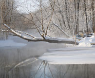 Reflection of a snow covered tree in a non-freezing lake in a wi Royalty Free Stock Photography