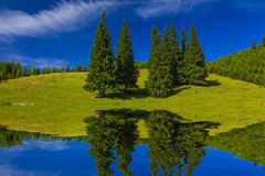 Reflection  spring landscape in the water. Stock Photo