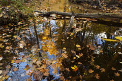 Reflection in still creek. Royalty Free Stock Image