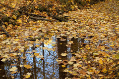 Reflection in still creek. Stock Photography