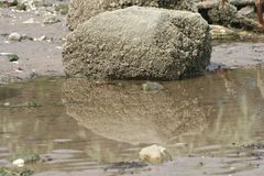 Reflection of a Stone. Stones express power and great strength. This one made me think the stone was dissolving in the water Stock Photo