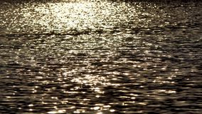 Reflection of the sun in water. Reflection of soft sunlight on the surface of the autumn lake. Glare of sunlight on the water surface stock video