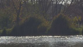 Reflection of the sun in water. Reflection of soft sunlight on the surface of the autumn lake. Glare of sunlight on the water surface stock video footage