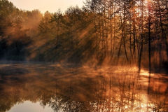 Reflection of the sunrays. In the lake Stock Image