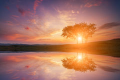 Reflection of the sunset with lonely tree Stock Image
