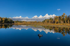 Reflection of the Tetons in fall Royalty Free Stock Photography