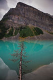 Reflection with tree. Beautiful reflection of a mountain in the water Royalty Free Stock Photo