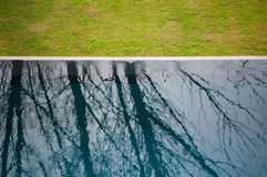 Reflection of tree. Reflection of  tree in blue swimming pool beside green yard Stock Photos