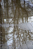 Reflection of tree branches in a puddle Royalty Free Stock Images