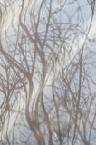 Reflection of tree branches in water Stock Photography