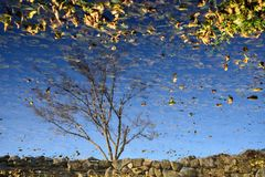 Reflection of tree Royalty Free Stock Photo