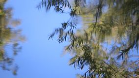 Reflection of tree leaves in the water background. Reflection of tree leaves in the water of a river stock video