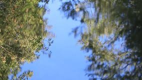 Reflection of tree leaves in the water background. Reflection of tree leaves in the water of a river stock footage
