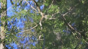 Reflection of tree leaves in the water background. Reflection of tree leaves in the water of a river stock video footage
