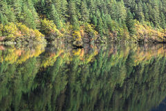 Reflection of tree on mirrir lake at Jiuzhaigou Stock Image
