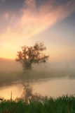 Reflection of a tree in a misty morning Stock Photo