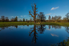 Reflection of tree. Photo was captured at Langley Park,Langley, UK royalty free stock image
