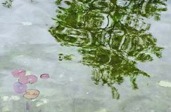 Reflection of a tree in a pond with lily pads in Japanese garden. Reflection of a tree on the surface of a pond with lily pads in a peaceful Japanese garden stock image