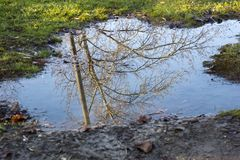Reflection of a tree Royalty Free Stock Images