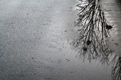 Reflection of a tree in a puddle. A reflection of a tee in a puddle during autumn Royalty Free Stock Photos