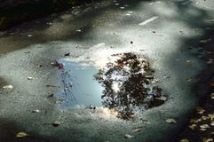 Reflection of tree silhouette clouds sky sun in Boise Greenbelt puddle stock photos
