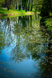 Reflection of tree trunks in water in the spring Stock Photo