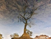 Reflection of a tree on stream water. stock photos