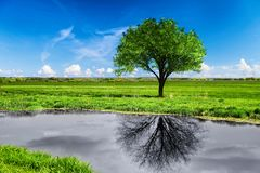 Reflection of a tree in water. Stock Images
