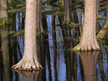 Reflection of trees. In water Royalty Free Stock Photography